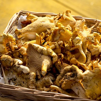 local chanterelle mushrooms