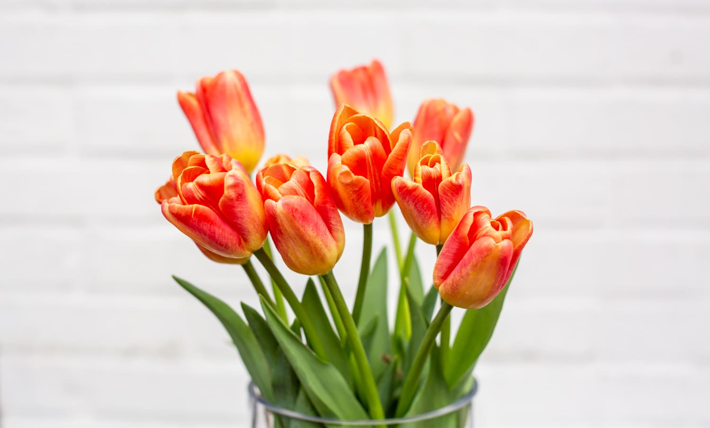 Orange/Red Tulips