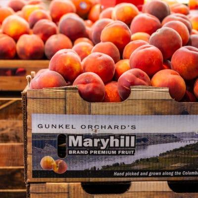 maryhill-peaches