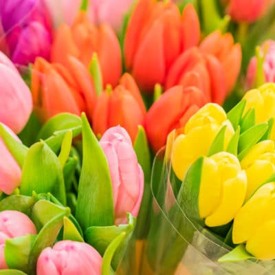 Colorful bunches of tulip flowers