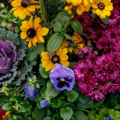 fall plant sale-horizontal