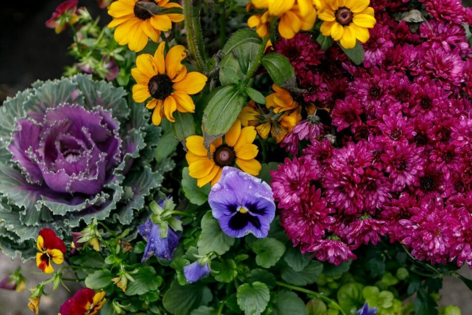 fresh flowers at Zupan's floral department